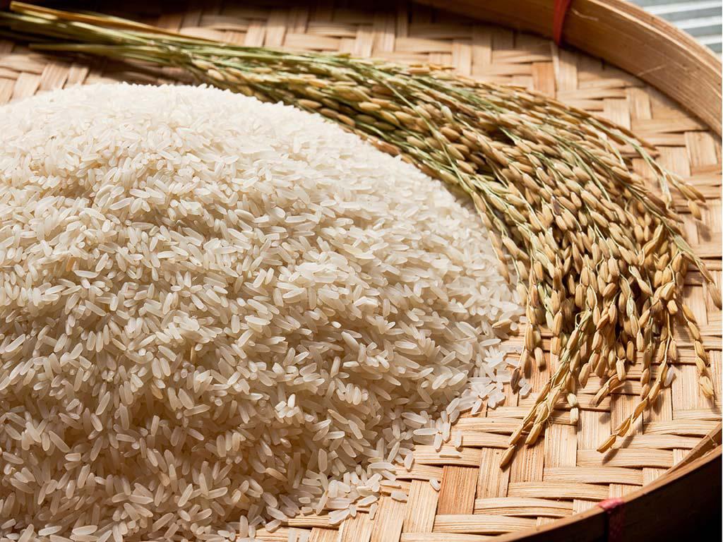 rice2 - راه های تشخیص برنج کهنه از تازه