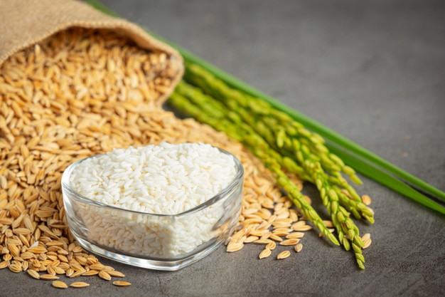 sack rice seed with white rice small glass bowl rice plant 1150 34304 - سوپر مارکت مشهد